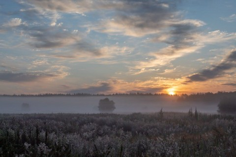 Утренняя симфония. Роса и облака.