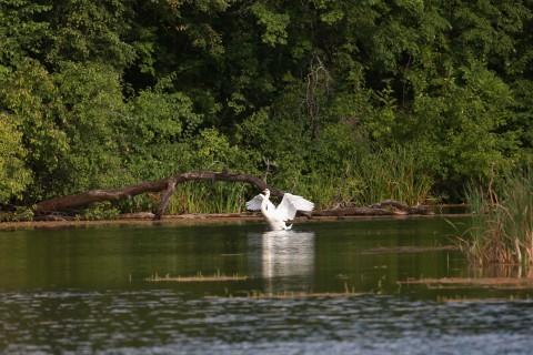 Лебединое озеро 3