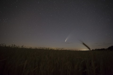 Комета неовайс над пшеничным полем.