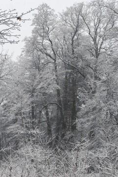 Январский снегопад.