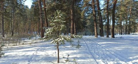 Январский лес.