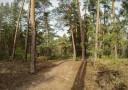 Кременской лес