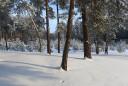 Кременской лес в январе.