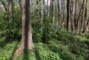 Весна в пойменном лесу.